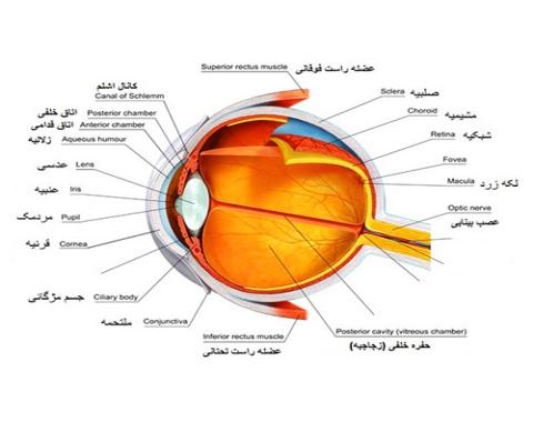 تشریح چشم